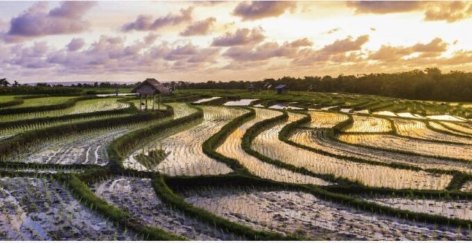 When is the best time to travel to Bali