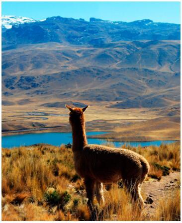 Great Peruresan 2