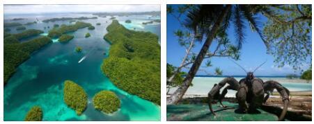 Micronesia Animals