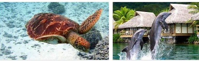 Tahiti Animals